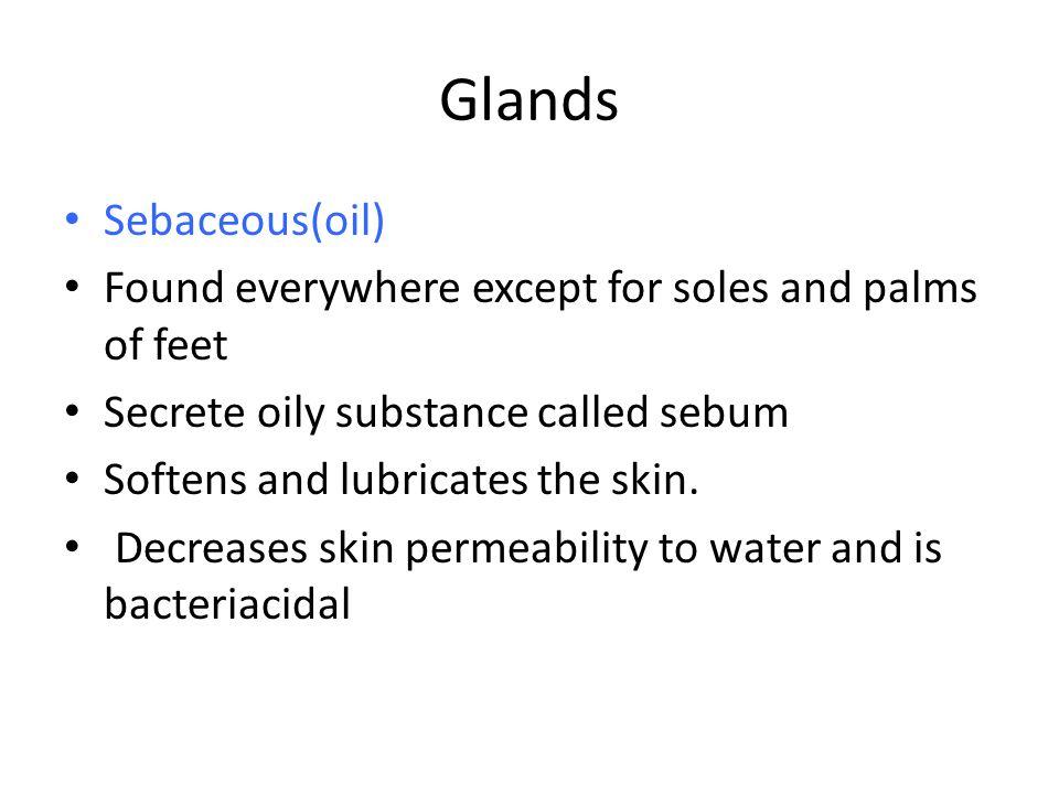 Glands Sebaceous(oil)