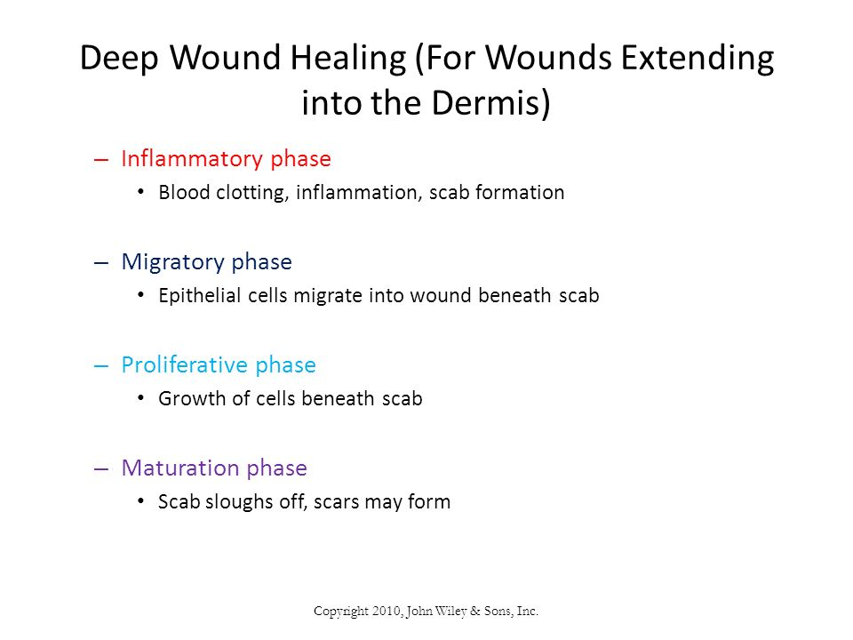 Deep Wound Healing (For Wounds Extending into the Dermis)