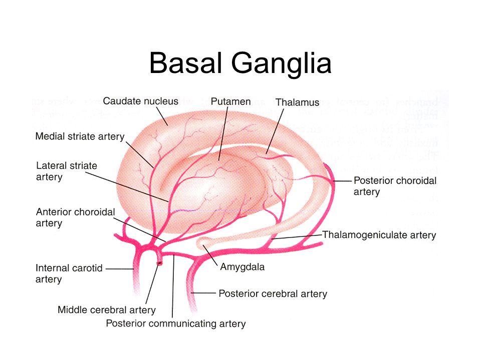 GABA and the Basal Ganglia Volume 160 Progress in Brain