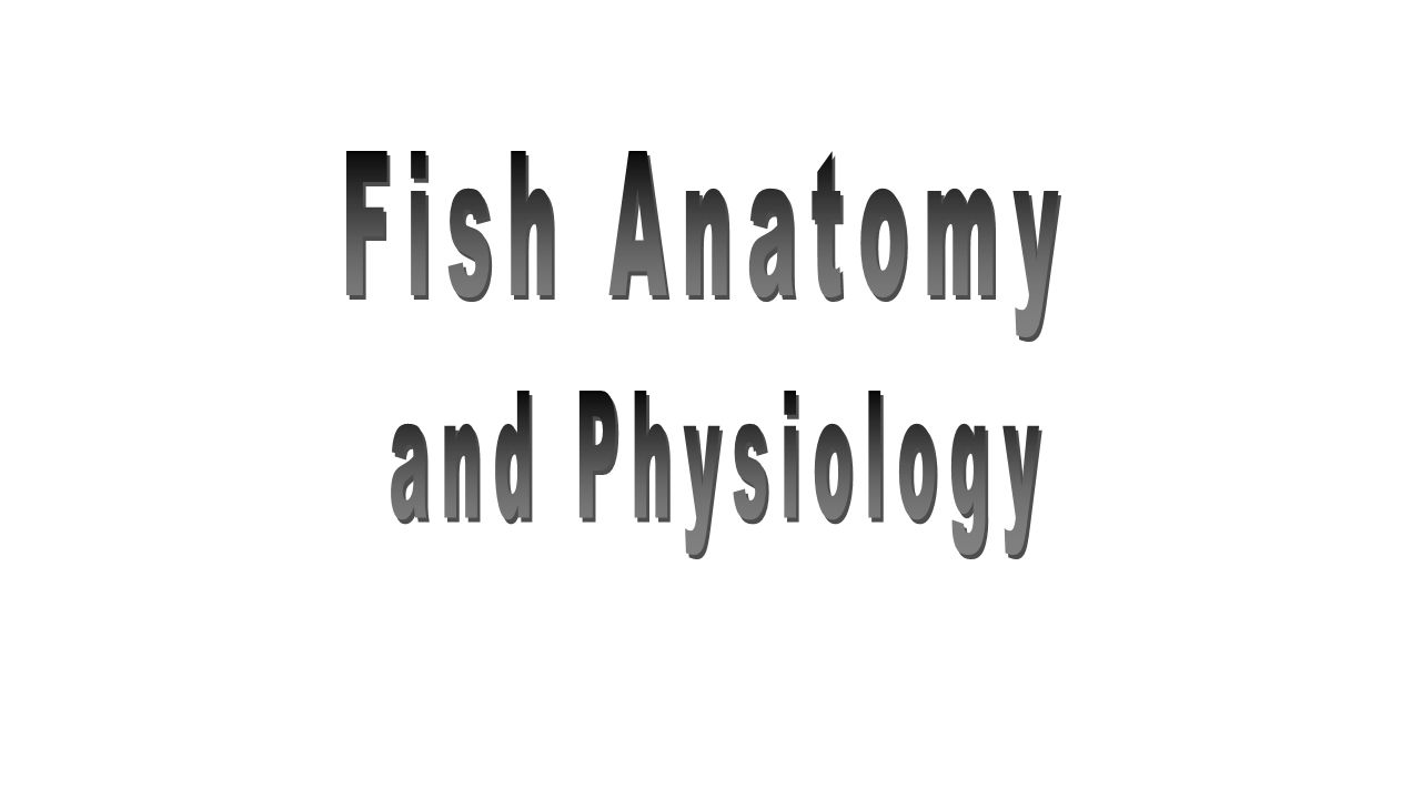 Fish Anatomy and Physiology. - ppt video online download