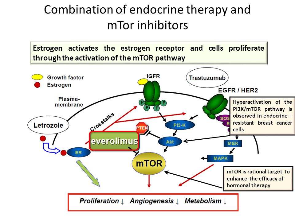 breast endocrine cancer in therapies