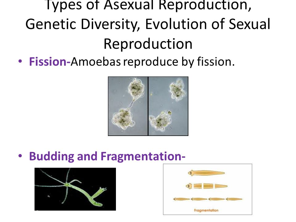 Chapter 7 Meiosis and Sexual Reproduction ppt download – Types of Asexual Reproduction Worksheet