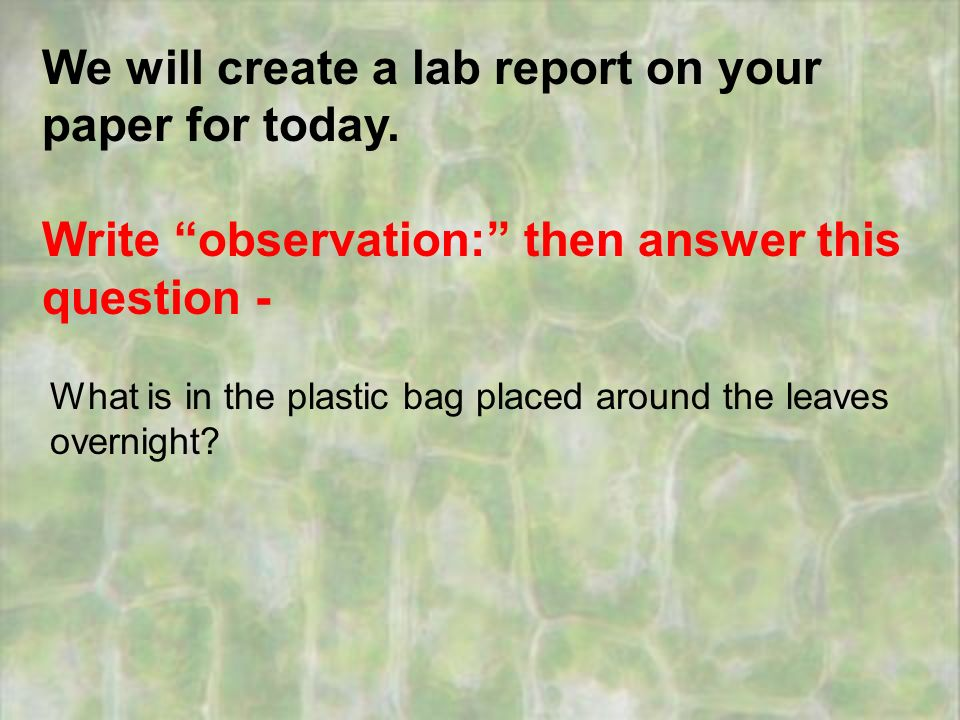 Stomata lab report