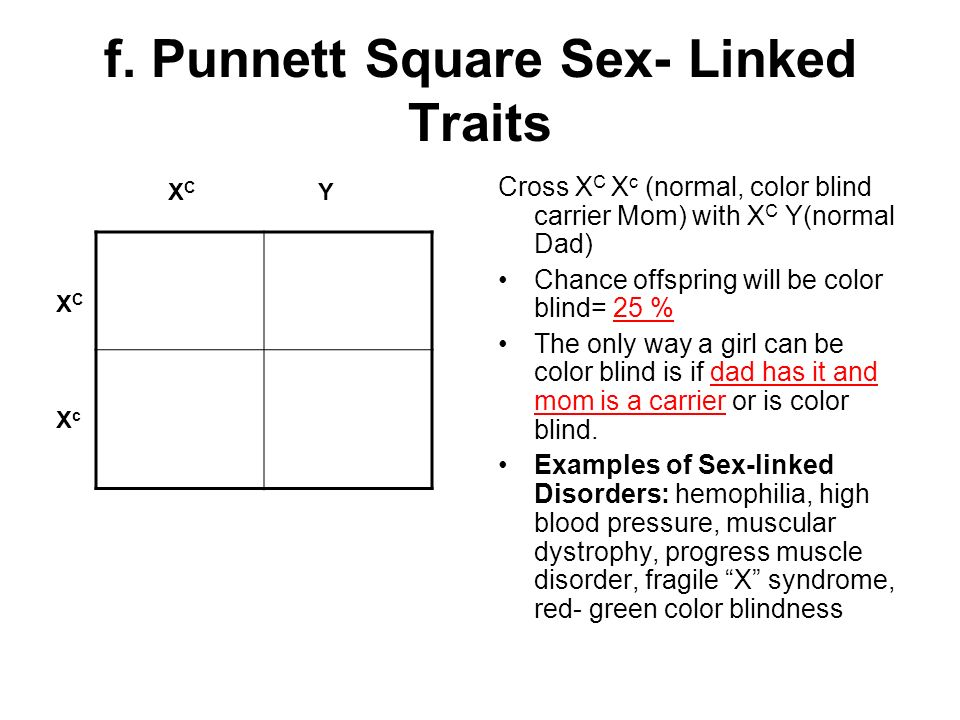 Lab report answer #2 - Virtual Lab Sex-Linked Traits Worksheet 1 ...