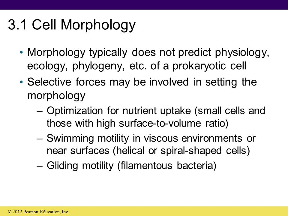 cell morphology and motility essay Testing sperm for male infertility the semen analysis test evaluates sperm count, motility & morphology normal ranges are shown with video and pictures.
