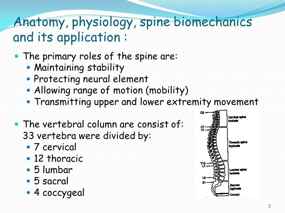 Fantastisch Lumbar Anatomy And Physiology Zeitgenössisch ...