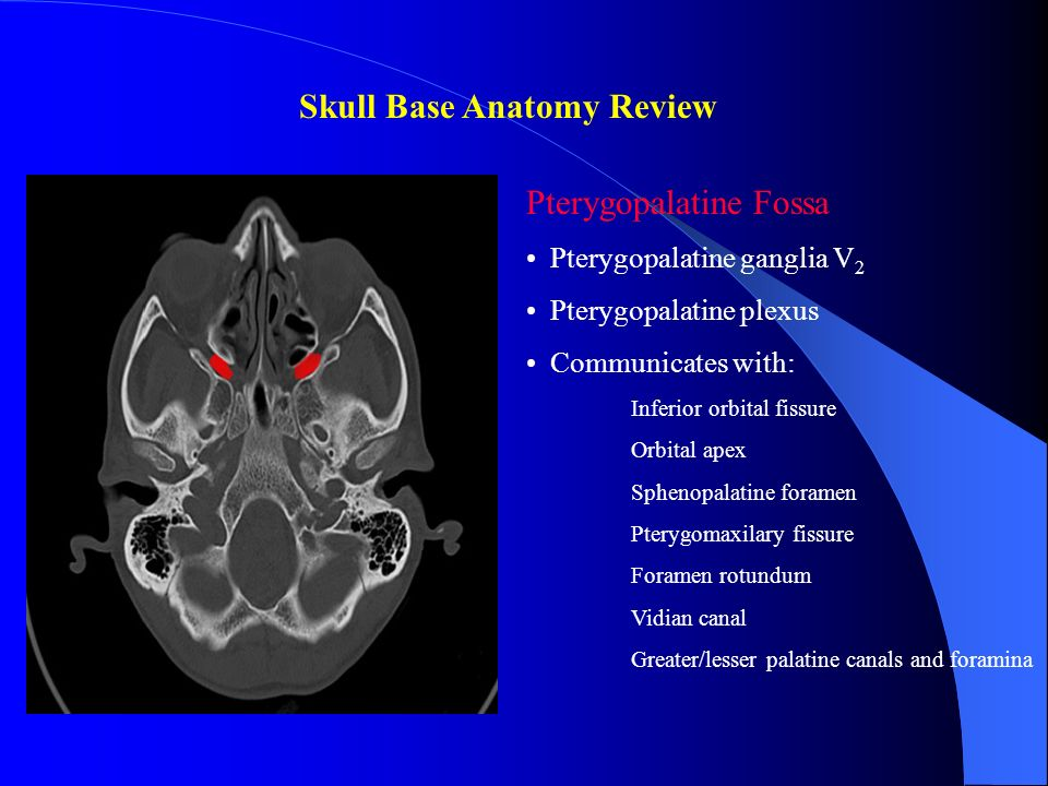 Skull Base Anatomy Review