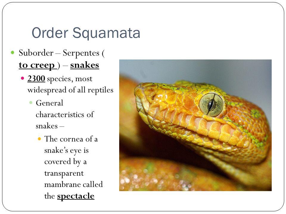 Types of Lizards Reptile Zoo Reptile Gardens Reptile Gardens