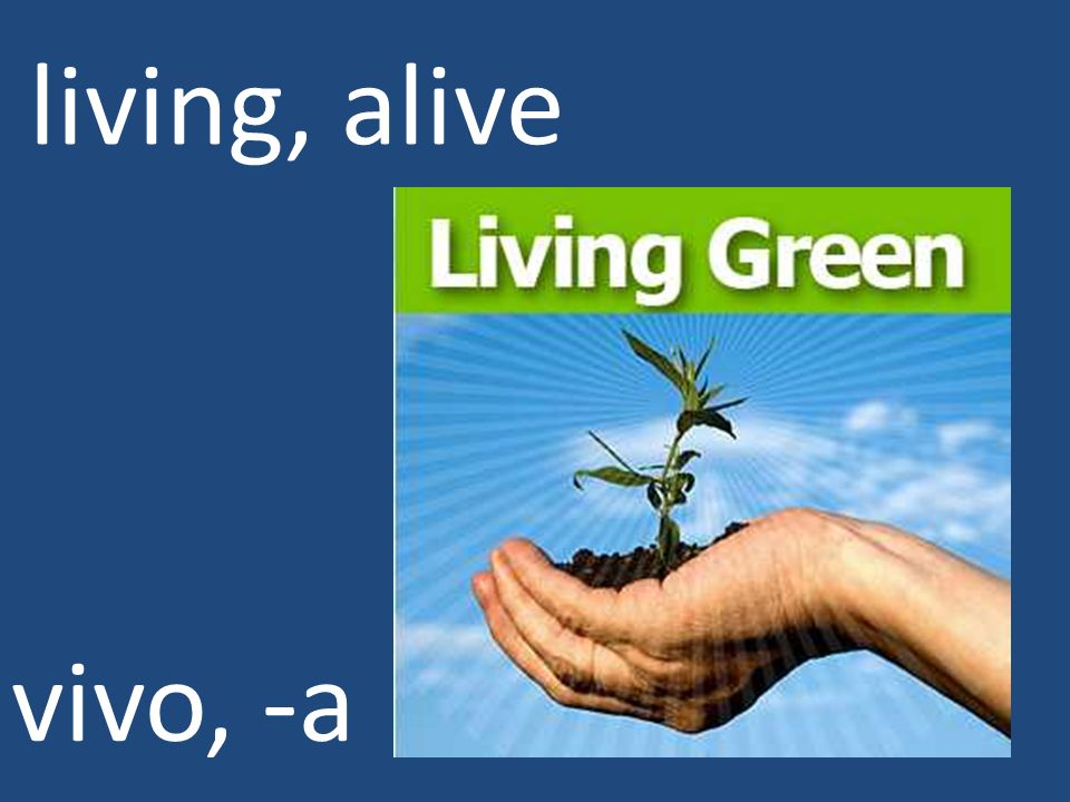 living, alive vivo, -a