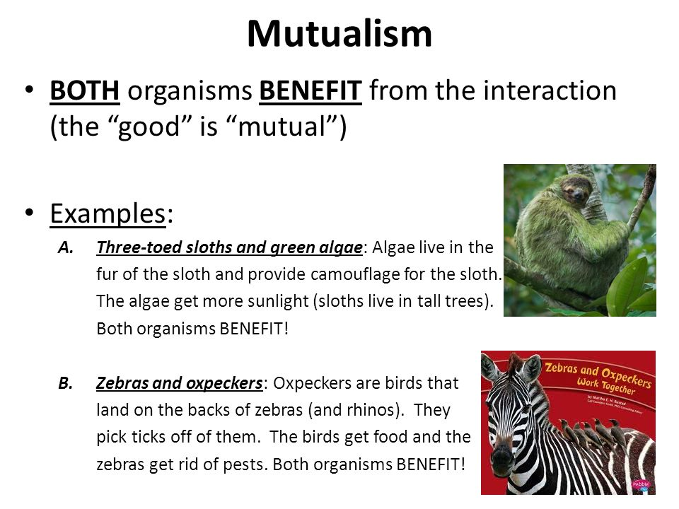 Symbiotic Relationships Mutualism Essay Homework Academic Writing