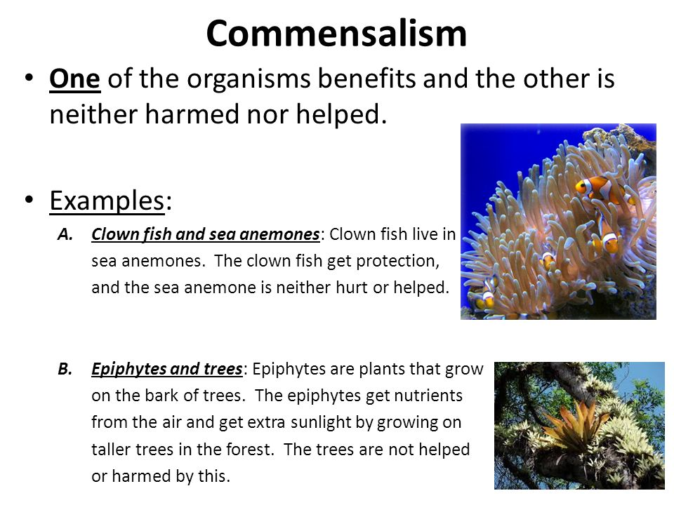 Image Result For Examples Of Symbiotic Relationships