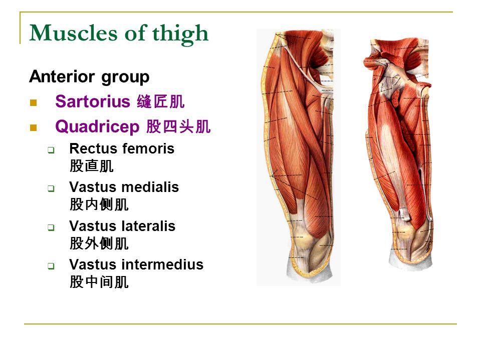 The lower limb(1) 山�...