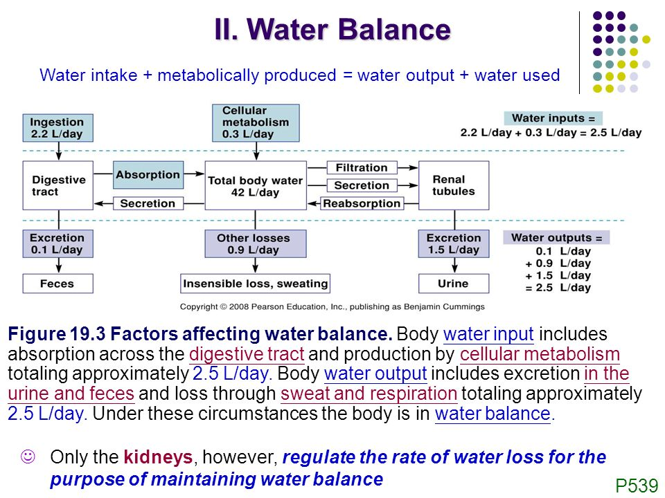 variables affecting urine output and solute Urinary inconsistency, an overflow of urine output, is another urological condition which is known to involve women more than men the opposite of such a condition, when unable to urinate , is known as urine retention.