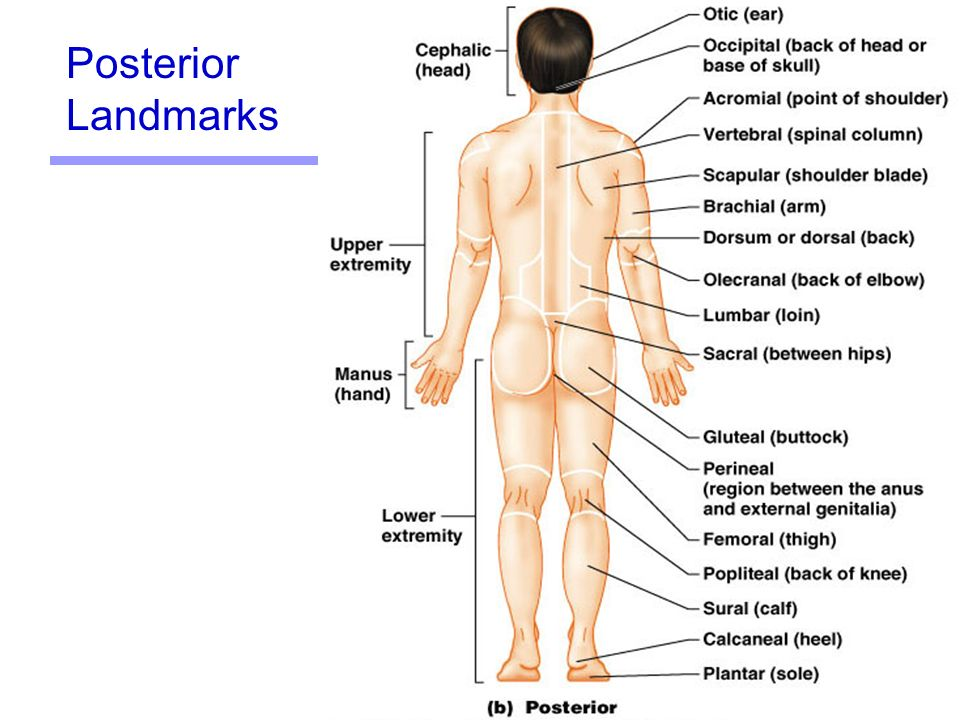 Language of Anatomy Chapter 1 - ppt download
