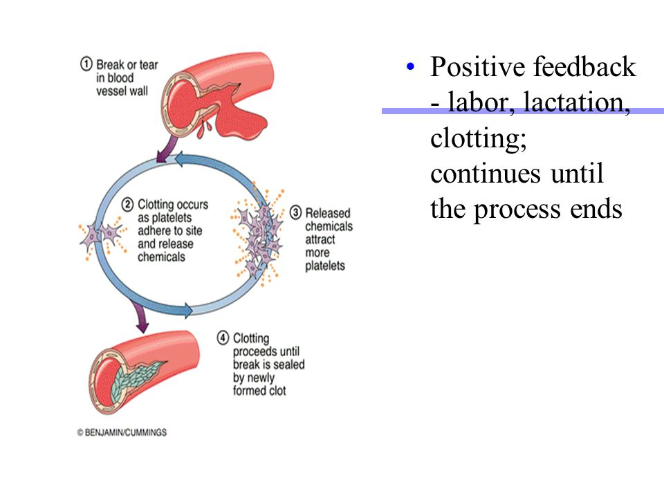 Attractive What Is Positive Feedback In Anatomy Images - Anatomy ...