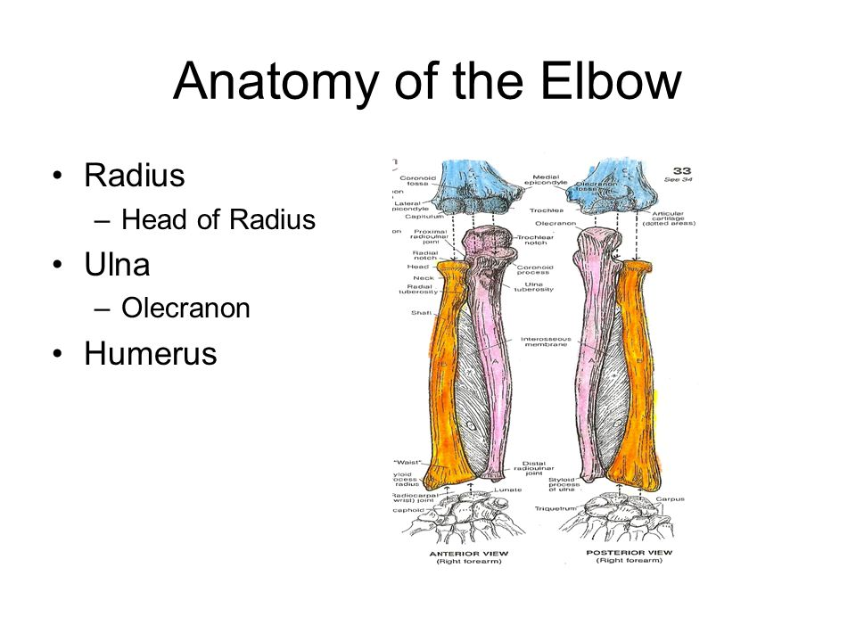 Elbow Wrist Hand Fingers Anatomy Injuries Ppt Video Online