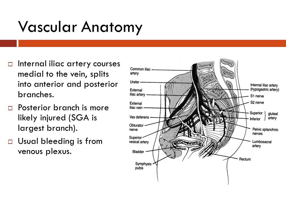 Fein Kiefer Prämolaren Anatomie Fotos - Anatomie Ideen - finotti.info