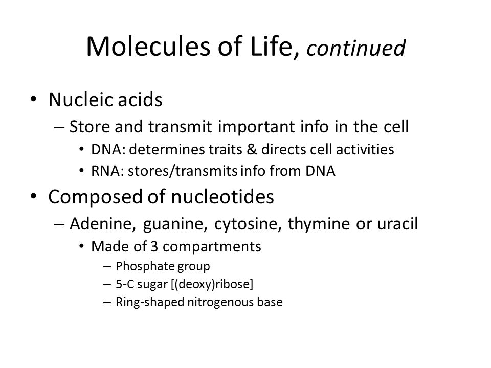 Modern Biology Chapter 3 ppt download – Molecules of Life Worksheet