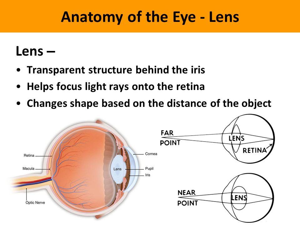 Luxury Eye Anatomy Lens Images - Human Anatomy Images ...