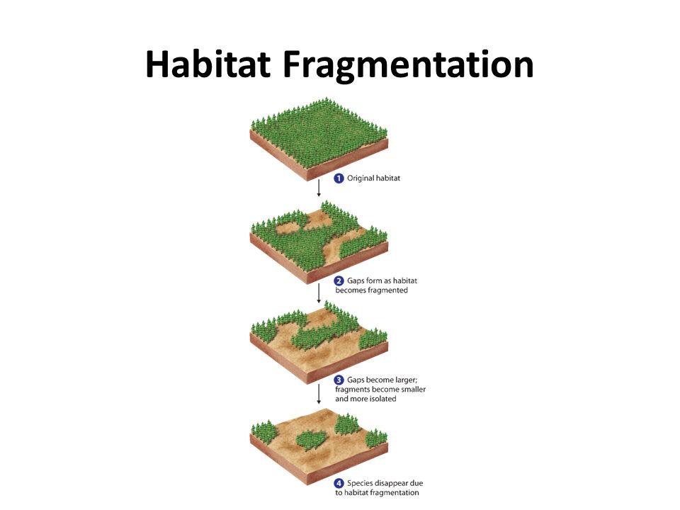 what is habitat fragmentation pdf
