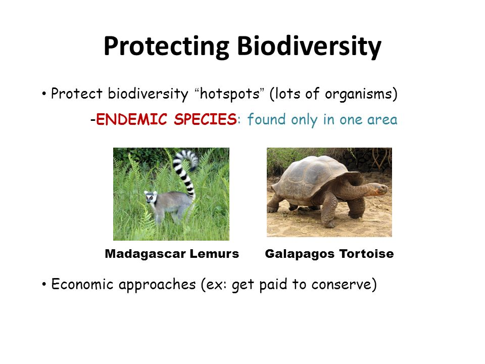 Biodiversity & Species Conservation