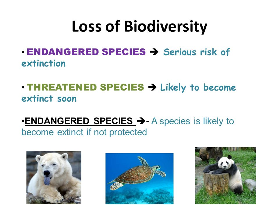 a discussion about endangered species and the causes of their extinction An endangered species is a species (a population) of animals,  only a few plants and animals at risk of extinction, mostly vertebrates, are put on the lists and get legal protection many more species become extinct, or will become extinct, without people knowing about it.