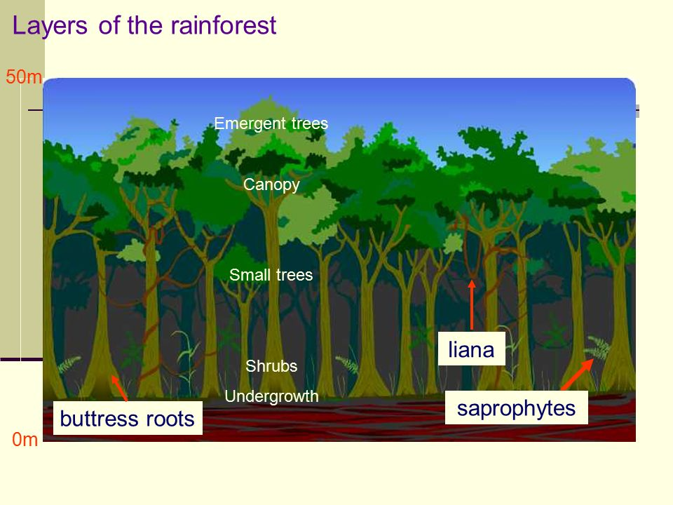 Creating unbalanced d3 tree diagram