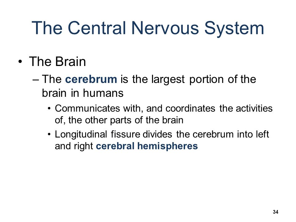 Research on the mind Hemispheres and the Nervous System