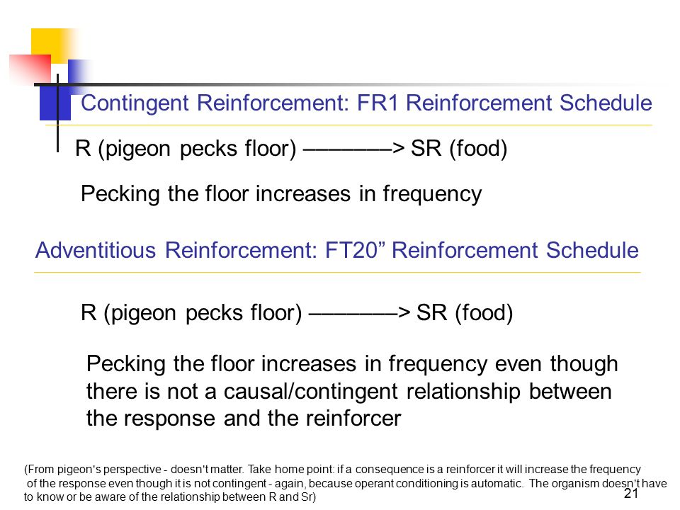 an introduction to the relationship between response and reinforcer Preceding reinforcer this relationship was observed when two magnitudes  introduction in addition to the  and response-initiated fi schedules.