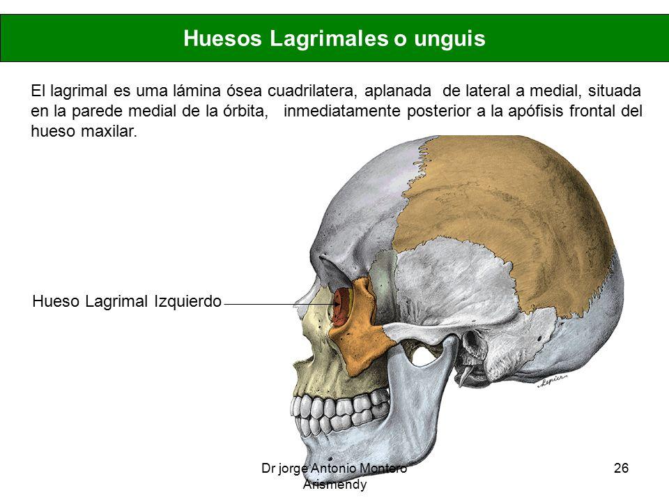 Excepcional Anatomía Hueso Lagrimal Imágenes - Anatomía de Las ...