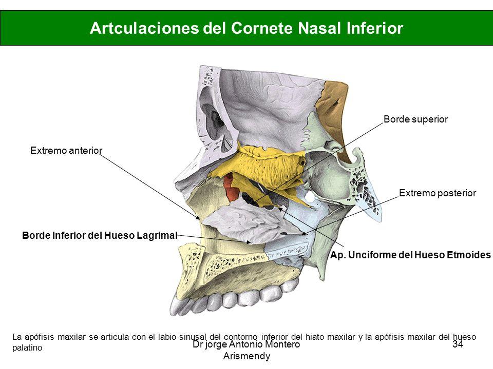 Excepcional Inferior Anatomía Hueso Motivo - Anatomía de Las ...