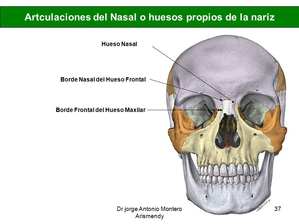 Contemporáneo Hueso De La Nariz Elaboración - Anatomía de Las ...