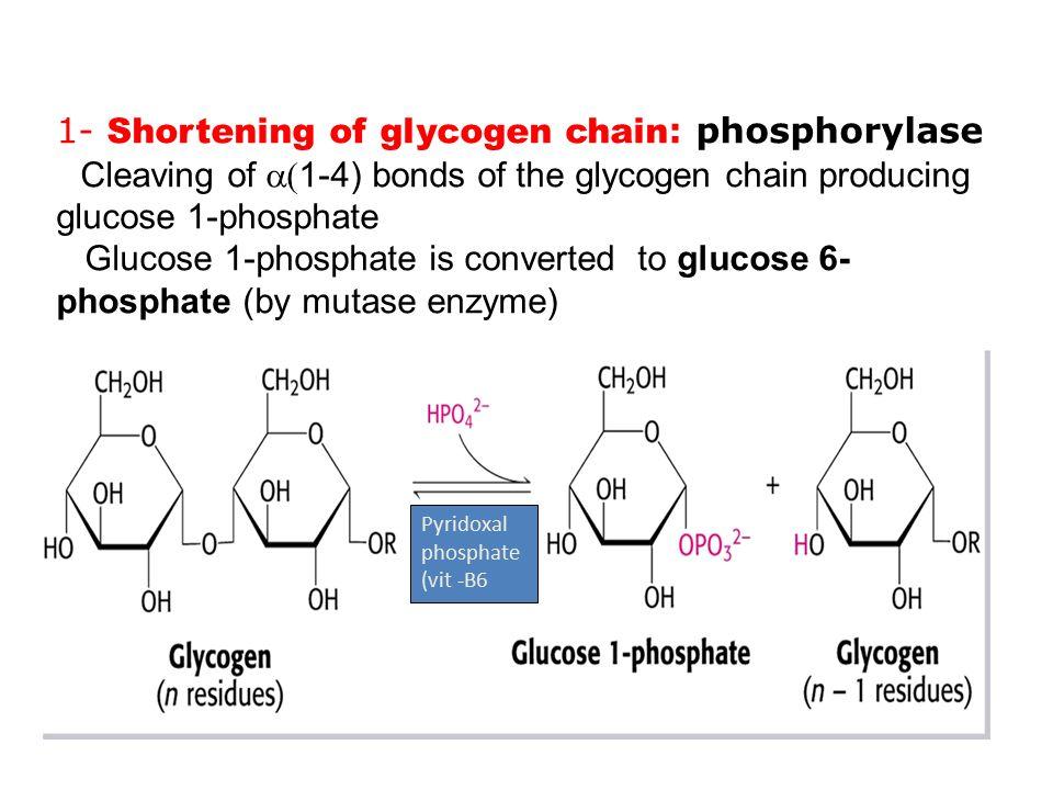 glucose glycogeen