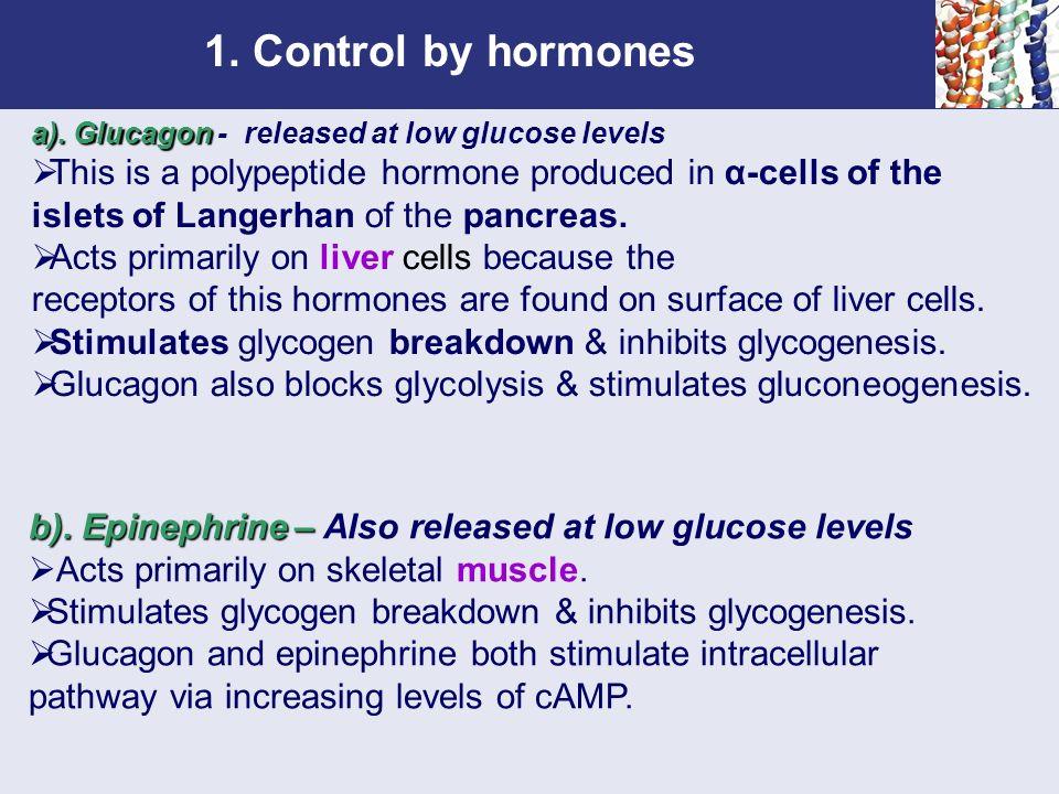Chapter 6 Gluconeogenesis, Glycogen Metabolism, and the Pentose ...