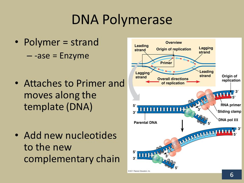 polymerase chain reaction pcr essay Polymerase chain reaction essays: over 180,000 polymerase chain reaction essays, polymerase chain reaction term papers, polymerase chain reaction research paper, book reports 184 990 essays, term and research papers available for unlimited access.