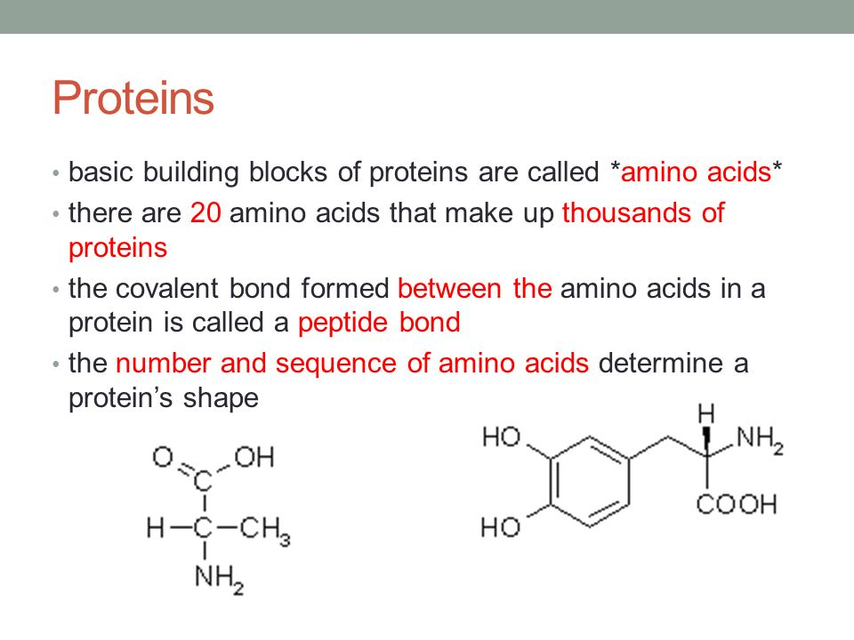 Amino Acid Building Protein Blocks