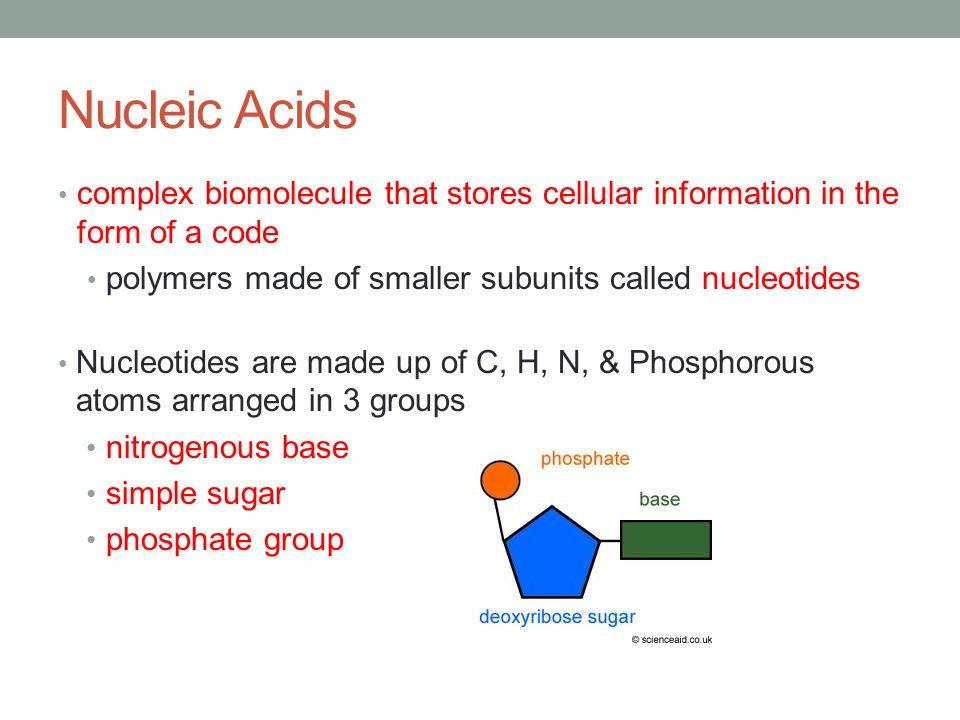 The Building Blocks Smaller Subunits Of Proteins Are