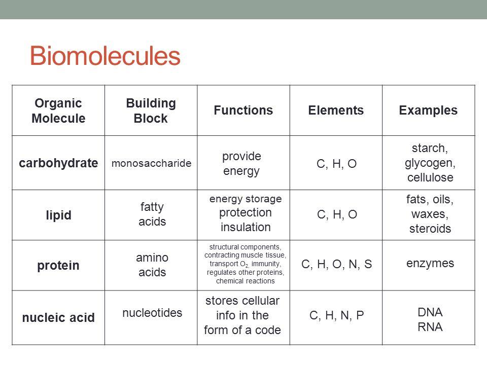Protein Molecule Building Blocks
