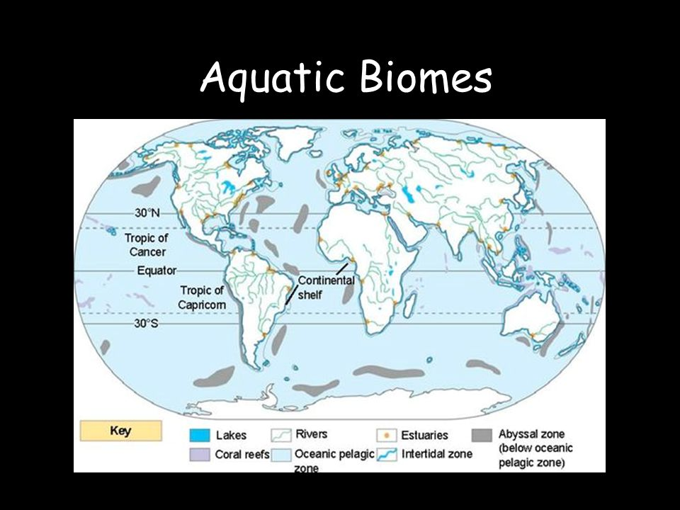Aquatic biomes ppt video online download 1 aquatic biomes gumiabroncs Gallery