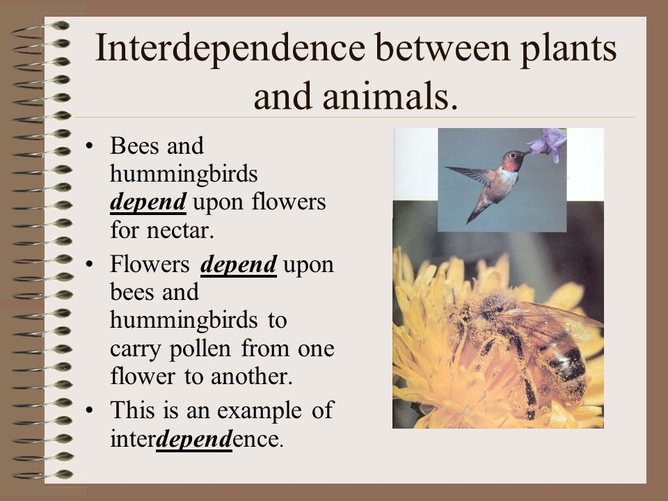 Interdependence Of Plants Animals Custom Paper Writing Service