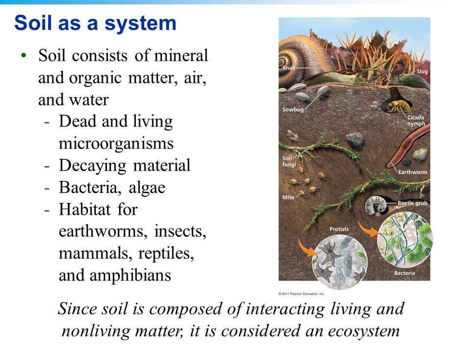6 food and soil ppt download for Is soil living