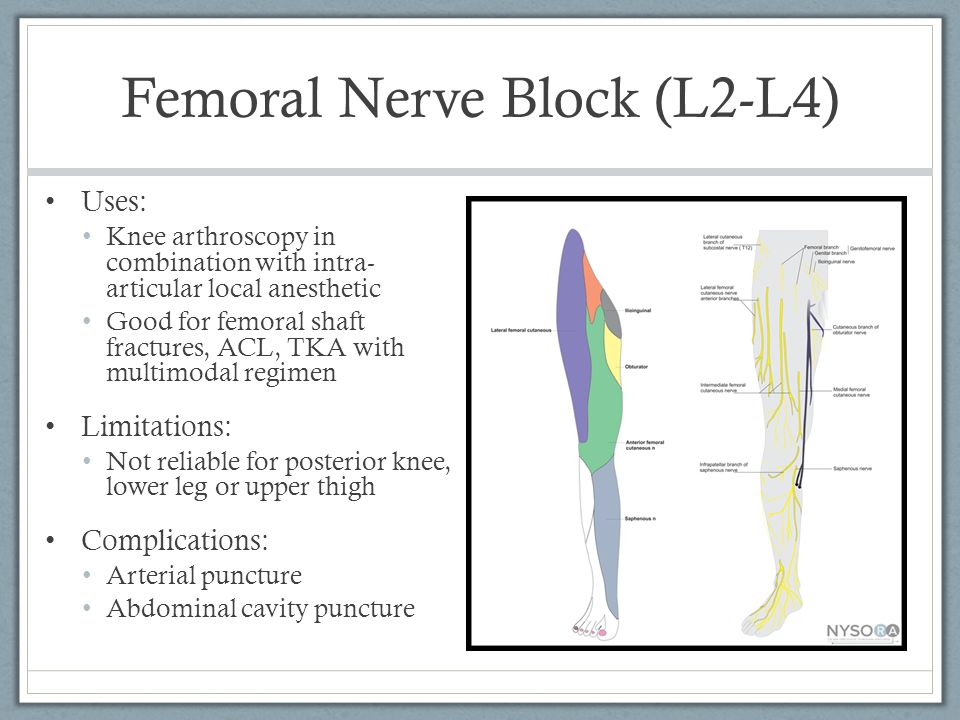 bernie miller, md, ca3 ohsu apom - ppt download, Muscles