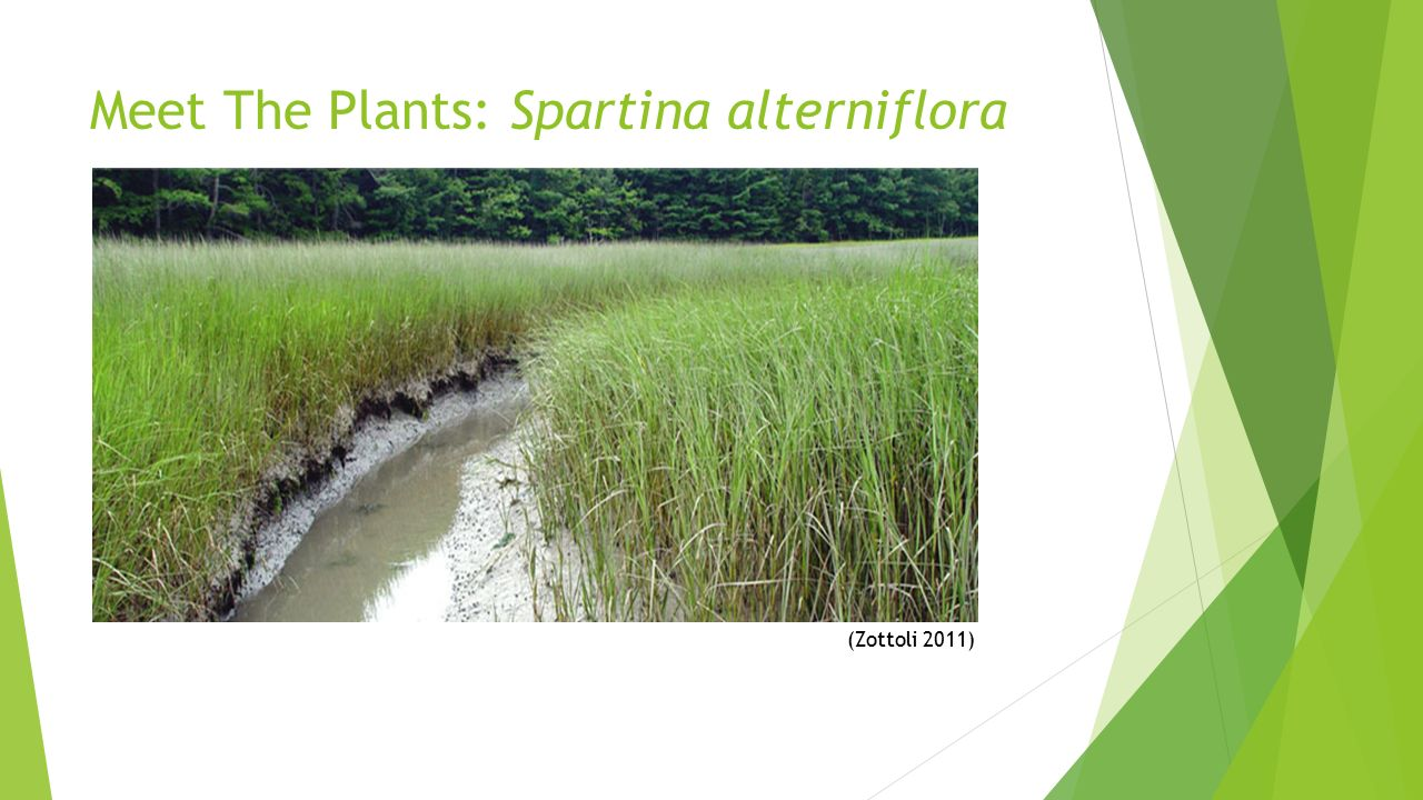 effect of eutrophication on plant growth essay Springerlink search home (increased eutrophication) increases plant growth nutrient availability had a significant effect on biomass partitioning in a.