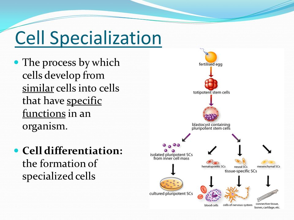 what is the relationship between differentiation and specialization