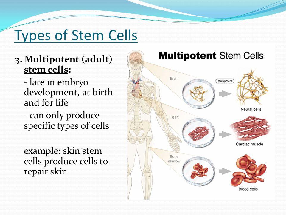 types of stem cells pdf