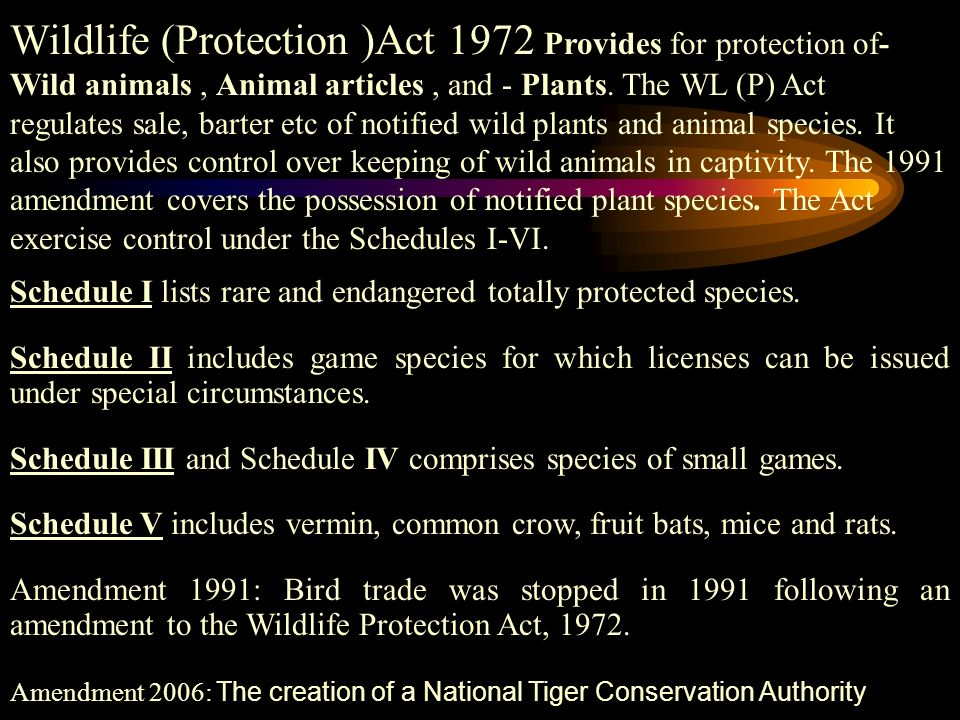 wildlife protection trade in wildlife articles