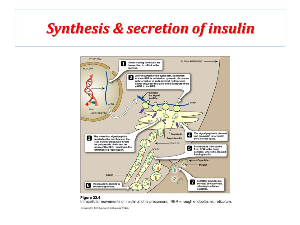 Insulin sythesis