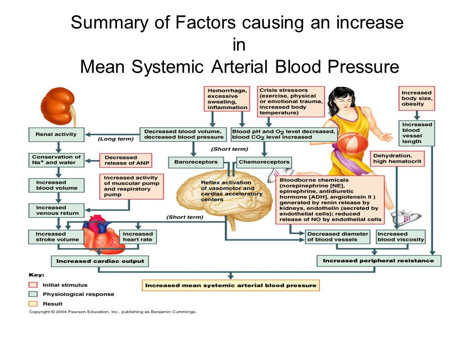 an overview of hypertension blood pressure Risk factors for hypertension people who have a major risk of developing hypertension, followed by complications and organ damage due to high blood pressure: smokers, diabetics, people over 50.