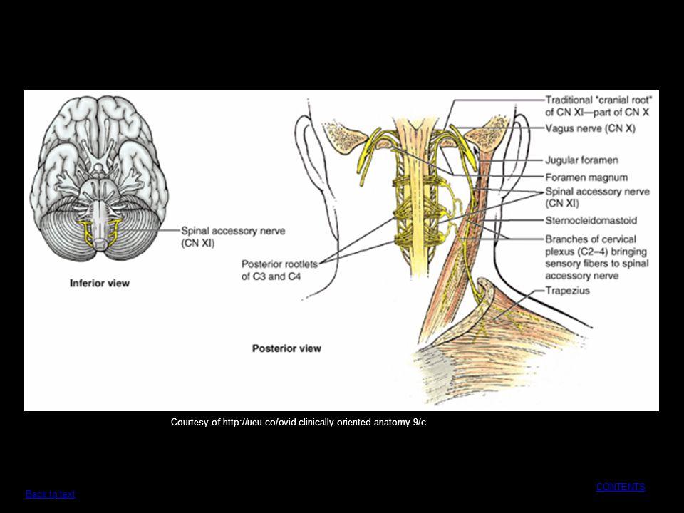 Dorable Download Clinically Oriented Anatomy Elaboration - Anatomy ...