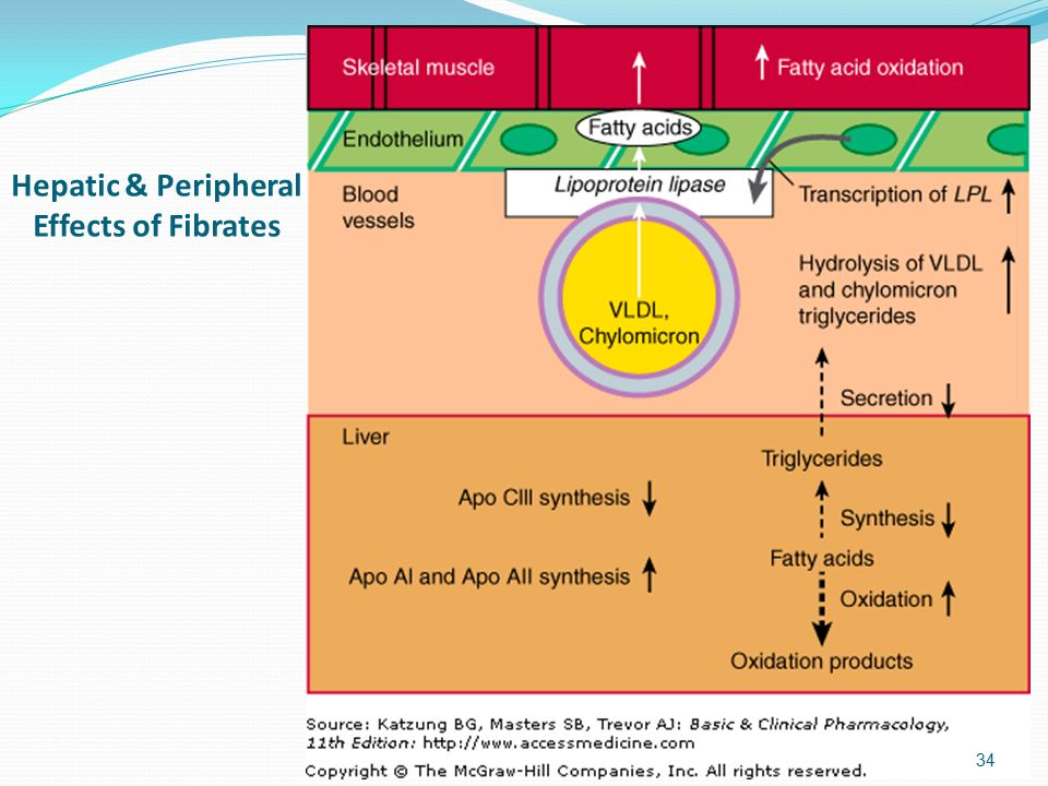 Hepatic & Peripheral Effects of Fibrates